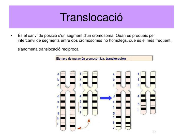 Translocació