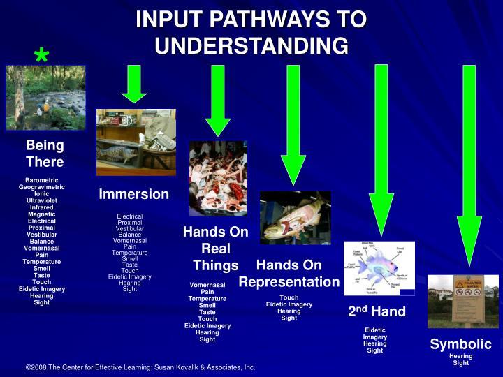 INPUT PATHWAYS TO UNDERSTANDING