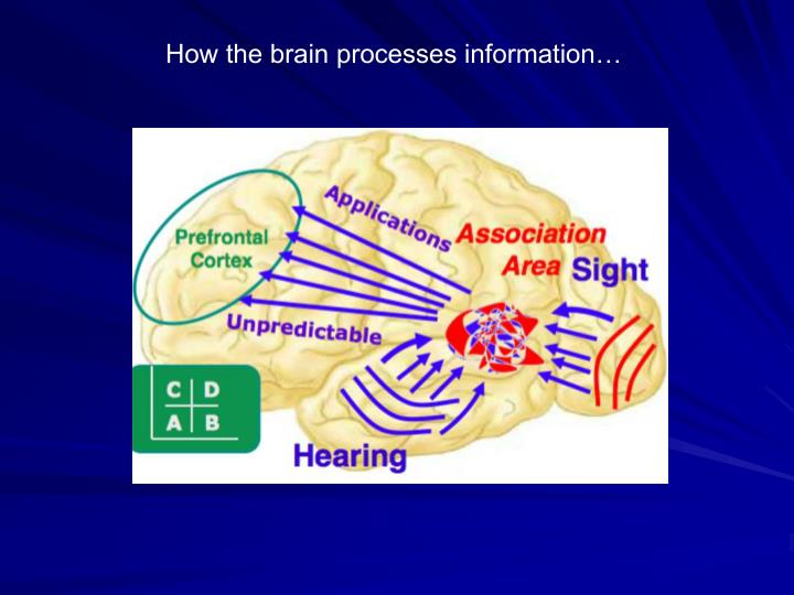 How the brain processes information…