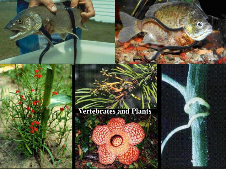 Vertebrates and Plants