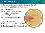 the cell cycle represents the life cycle of a cell