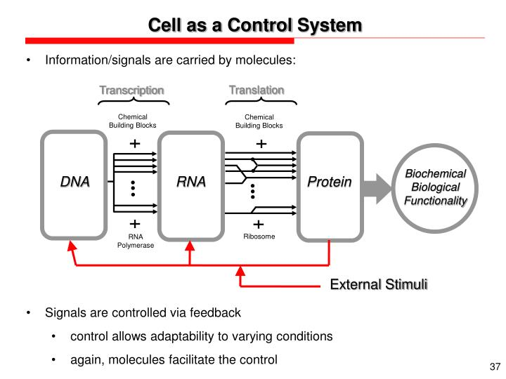 Cell as a Control