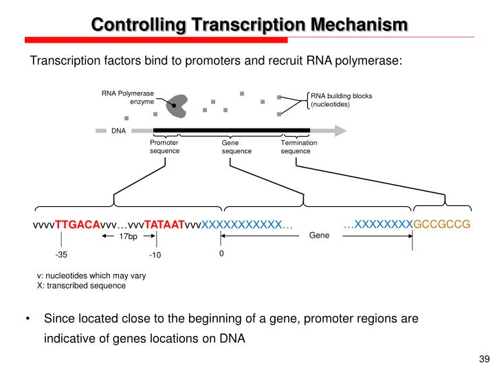 Controlling Transcription Mechanism