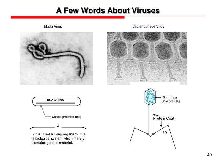 A Few Words About Viruses