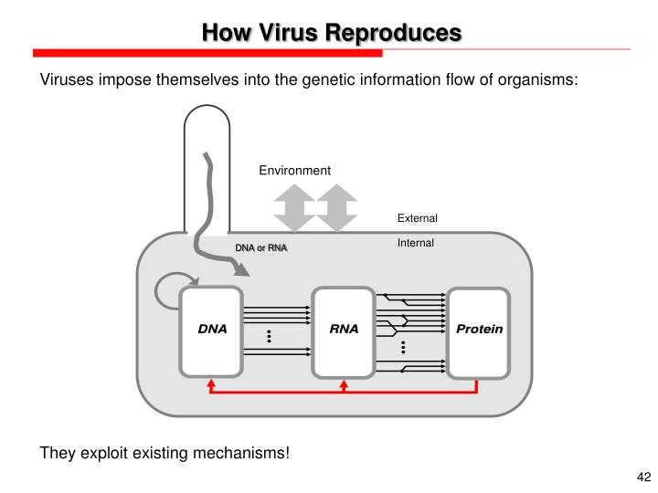 How Virus Reproduces