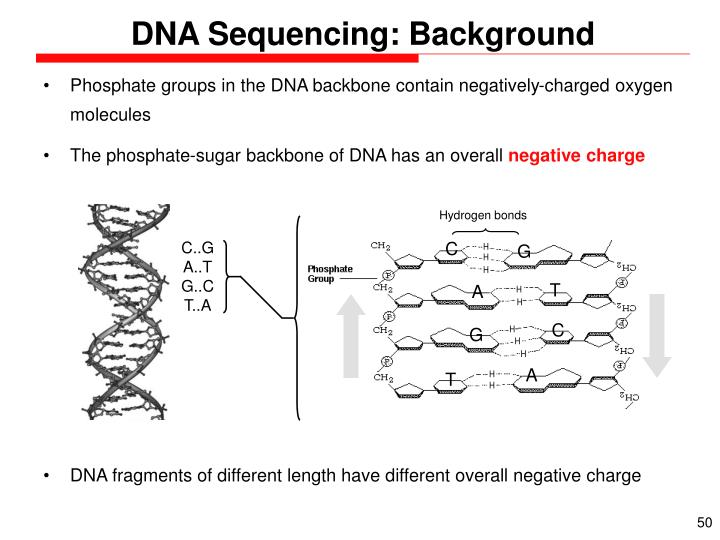 DNA Sequencing: Background