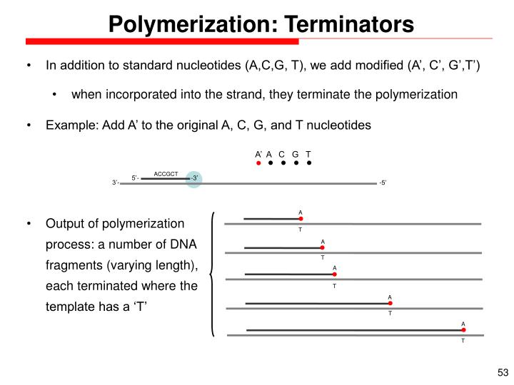 Polymerization: Terminators