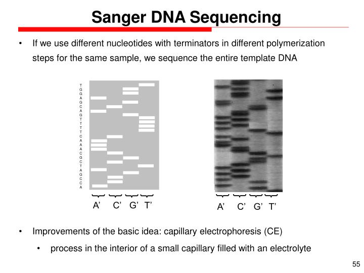 Sanger DNA Sequencing