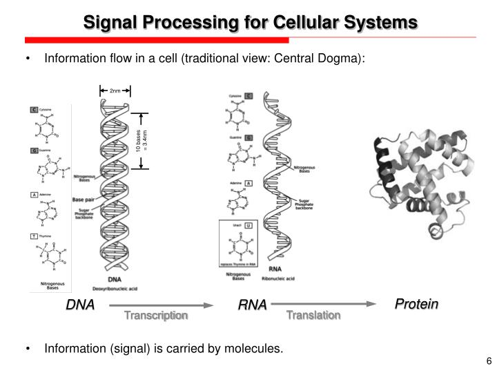 Signal Processing for Cellular Systems