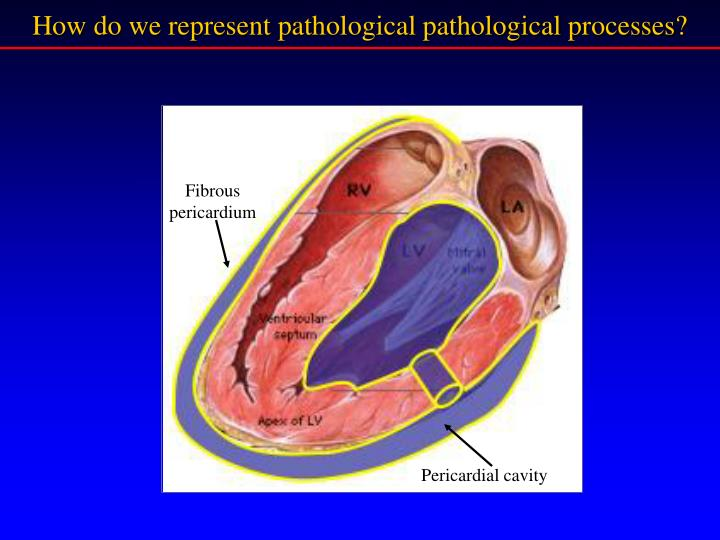 How do we represent pathological pathological processes?