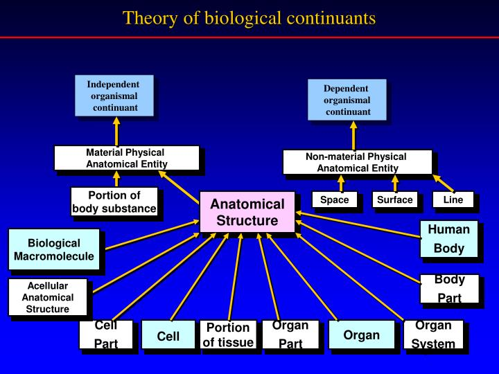 Theory of biological continuants