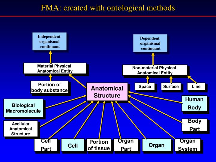FMA: created with ontological methods