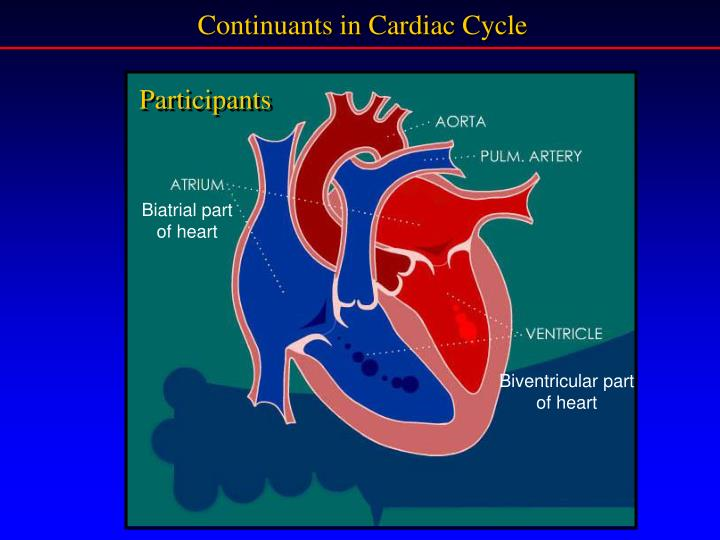Continuants in Cardiac Cycle