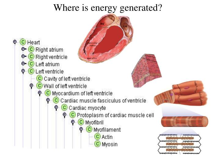 Where is energy generated?