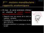 3 me molaire mandibulaire rapports anatomiques2