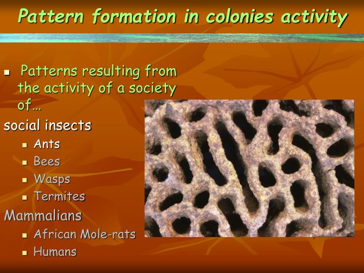 Pattern formation in colonies activity