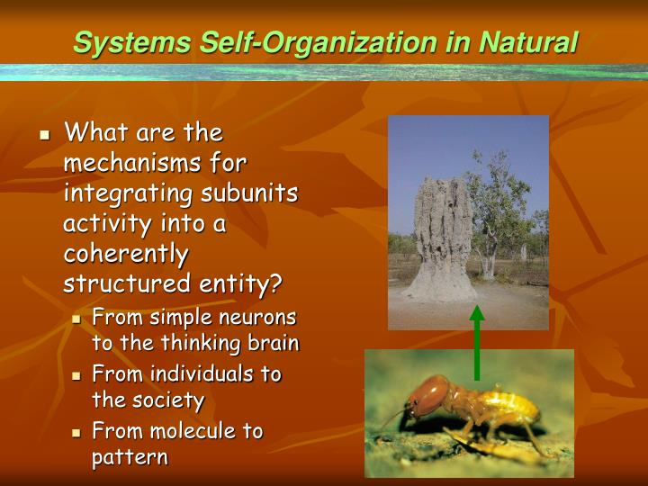 Systems Self-Organization in Natural