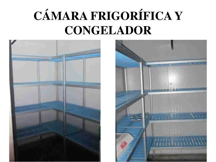 CÁMARA FRIGORÍFICA Y CONGELADOR