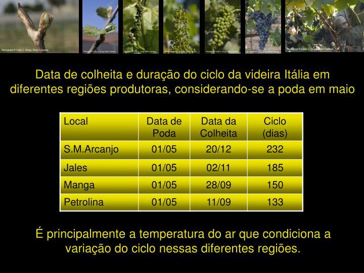 Data de colheita e duração do ciclo da videira Itália em diferentes regiões produtoras, considerando-se a poda em maio