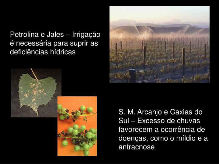 Petrolina e Jales – Irrigação é necessária para suprir as deficiências hídricas