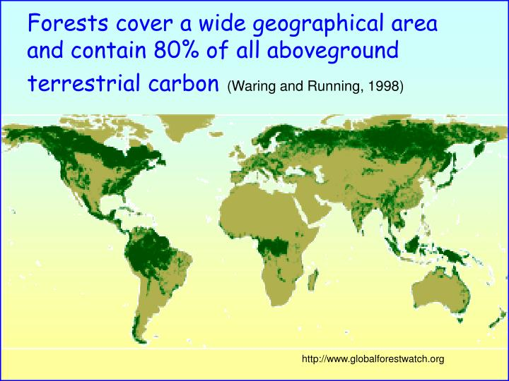 Forests cover a wide geographical area and