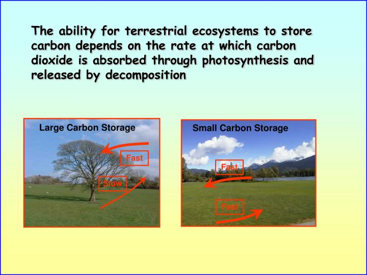 Small Carbon Storage