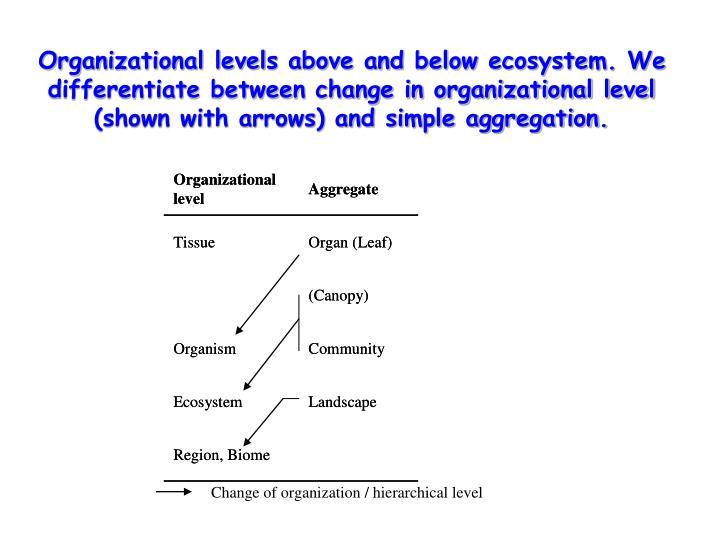 Organizational levels above and below ecosystem. We differentiate between change in organizational level (shown with arrows) and simple aggregation.