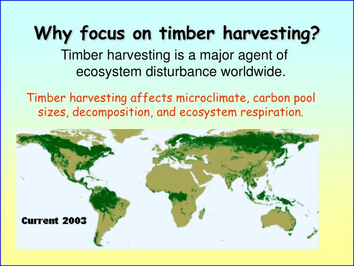 Why focus on timber harvesting?