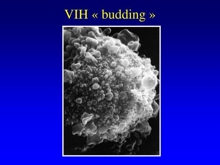 VIH «budding»
