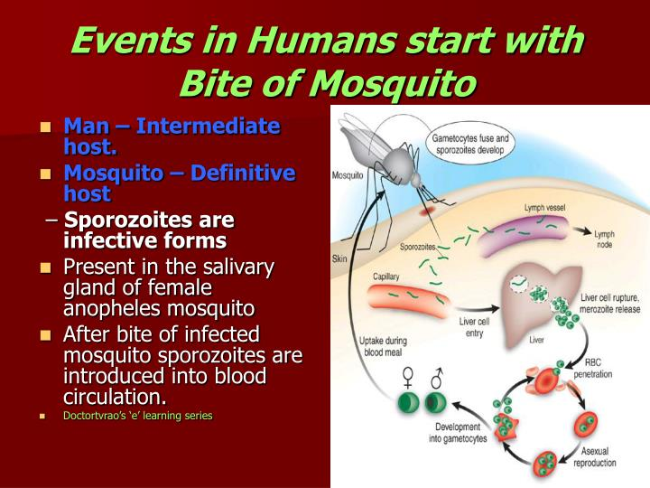 Events in Humans start with Bite of Mosquito