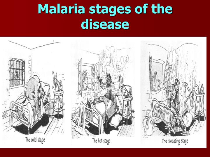 Malaria stages of the disease