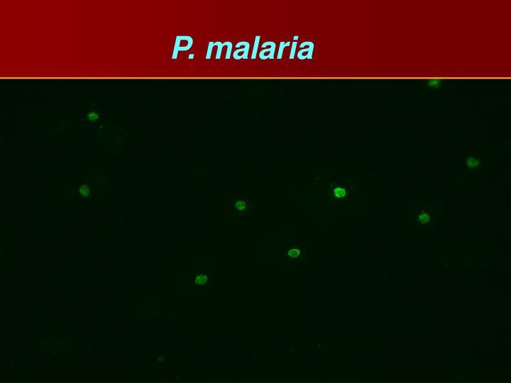 P. malaria