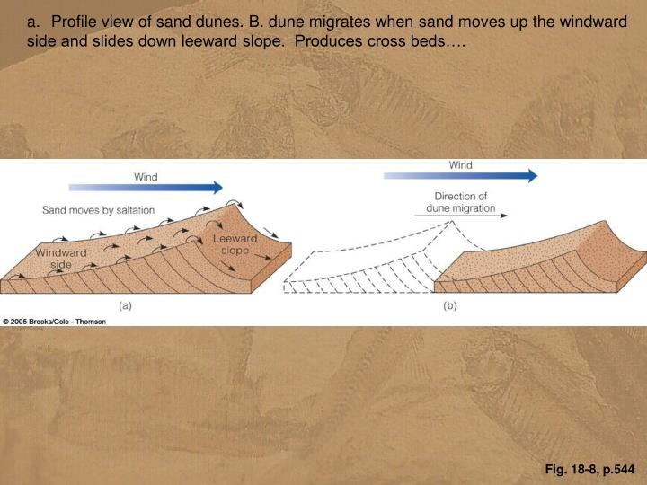 Profile view of sand dunes. B. dune migrates when sand moves up the windward