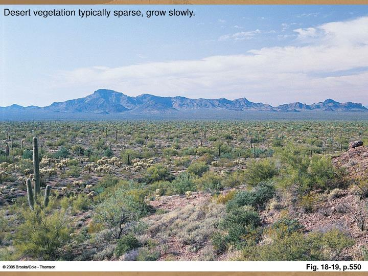 Desert vegetation typically sparse, grow slowly.