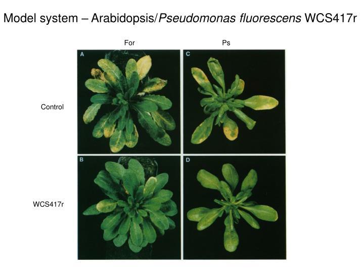 Model system – Arabidopsis/