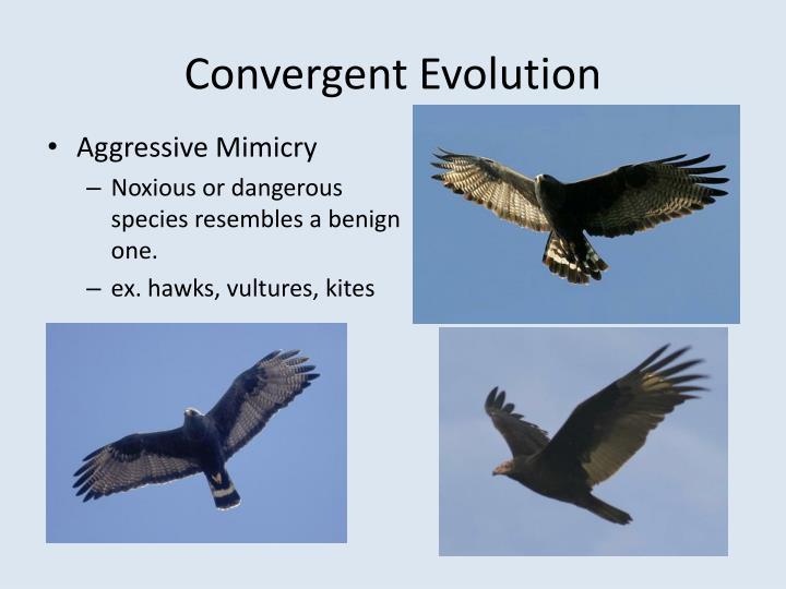 Convergent Evolution