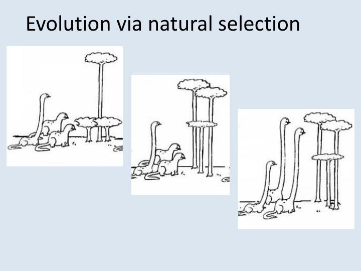 Evolution via natural selection