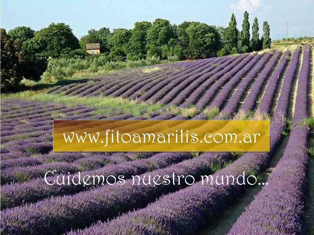 www.fitoamarilis.com.ar