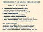 physiology of brain protection5