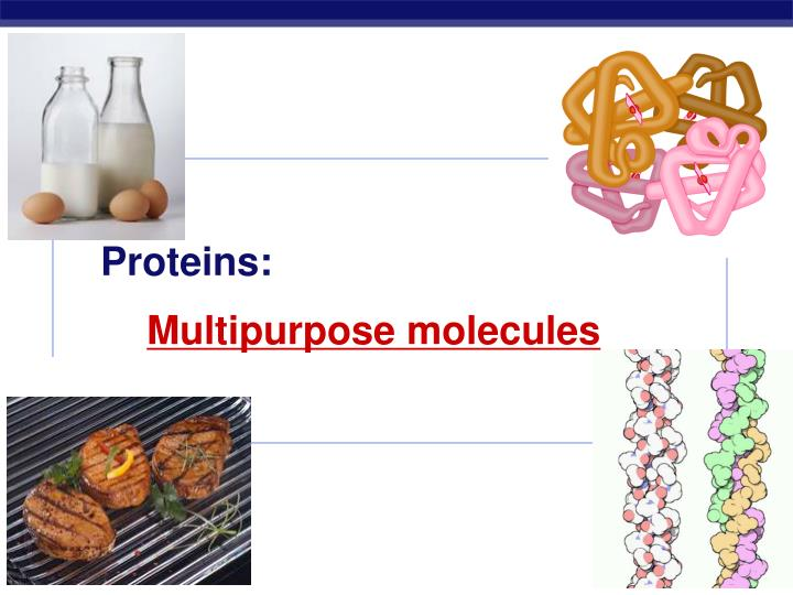 Proteins: