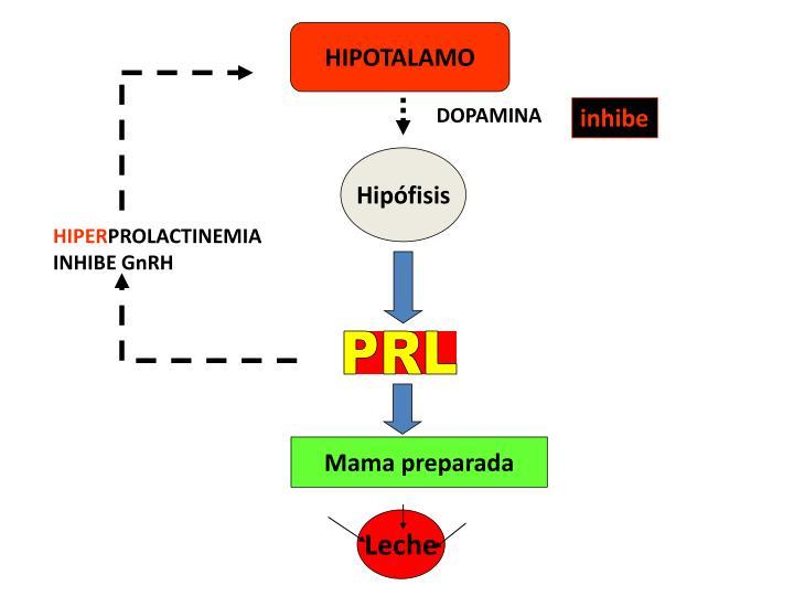 HIPOTALAMO