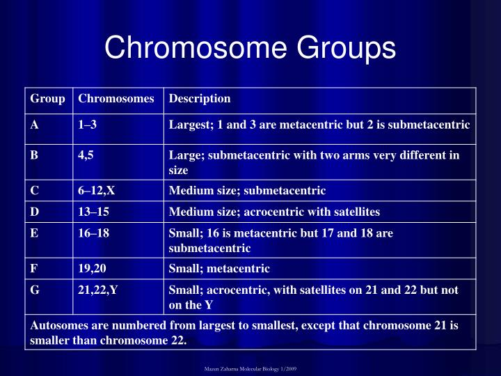 Chromosome Groups
