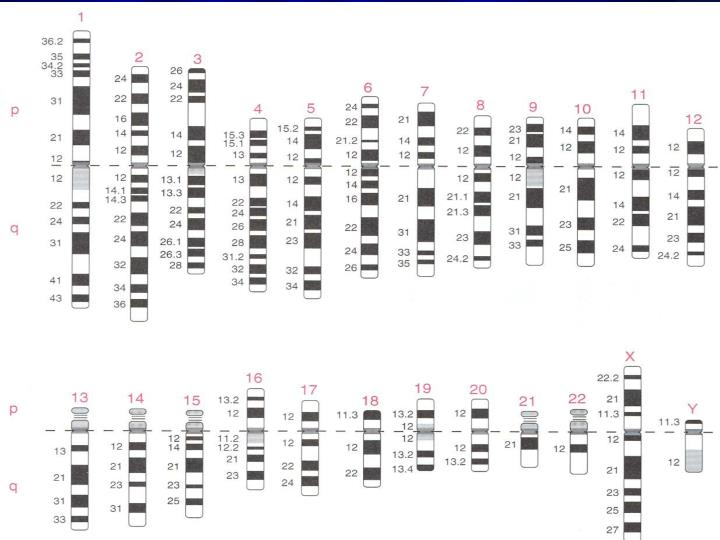 Mazen Zaharna Molecular Biology 1/2009