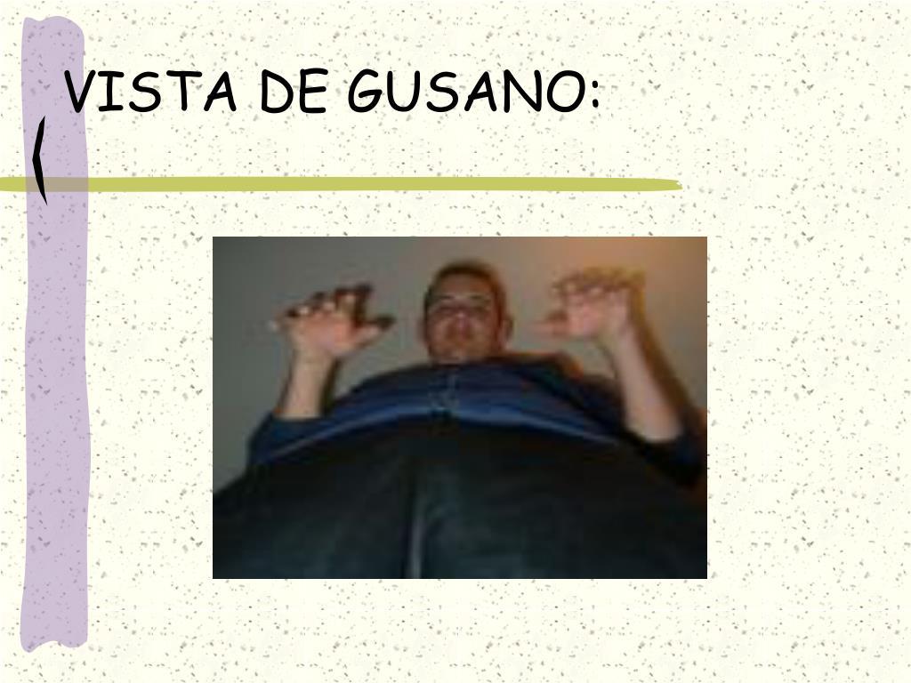 VISTA DE GUSANO: