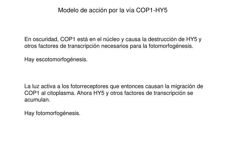Modelo de acción por la vía COP1-HY5