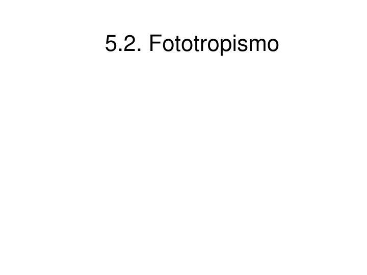 5.2. Fototropismo