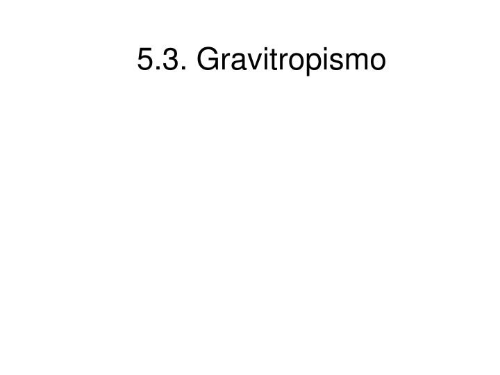 5.3. Gravitropismo