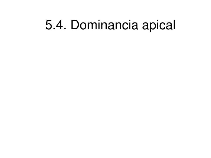 5.4. Dominancia apical