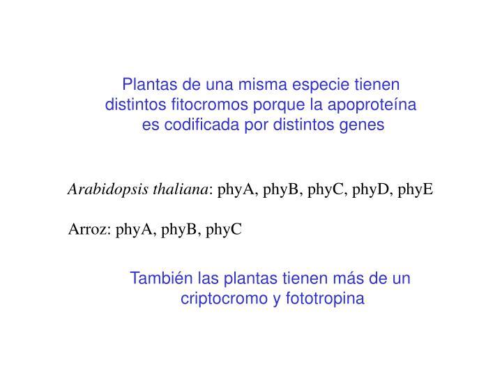 Plantas de una misma especie tienen