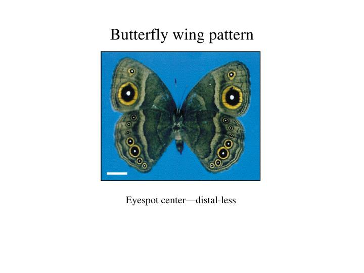 Butterfly wing pattern